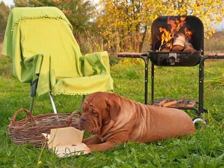 campingstol